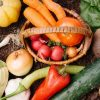 お医者さんや栄養士さんが健康のために摂っている食材を聞いてみた!