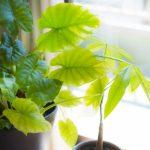 部屋に観葉植物を置こう 効果や育て方、おすすめ4選